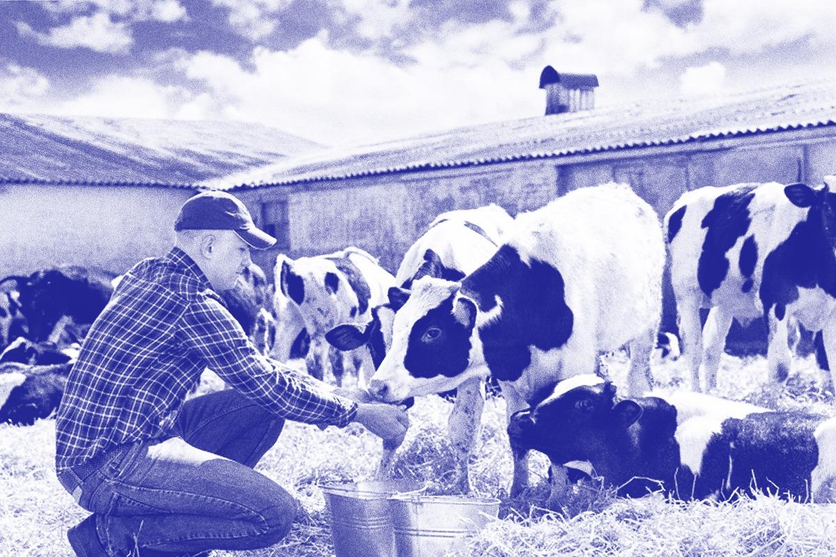 Bienestar Animal - Granjas Pascual