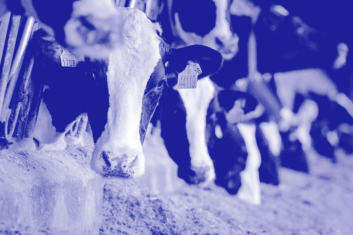 Antibióticos en la leche - mito